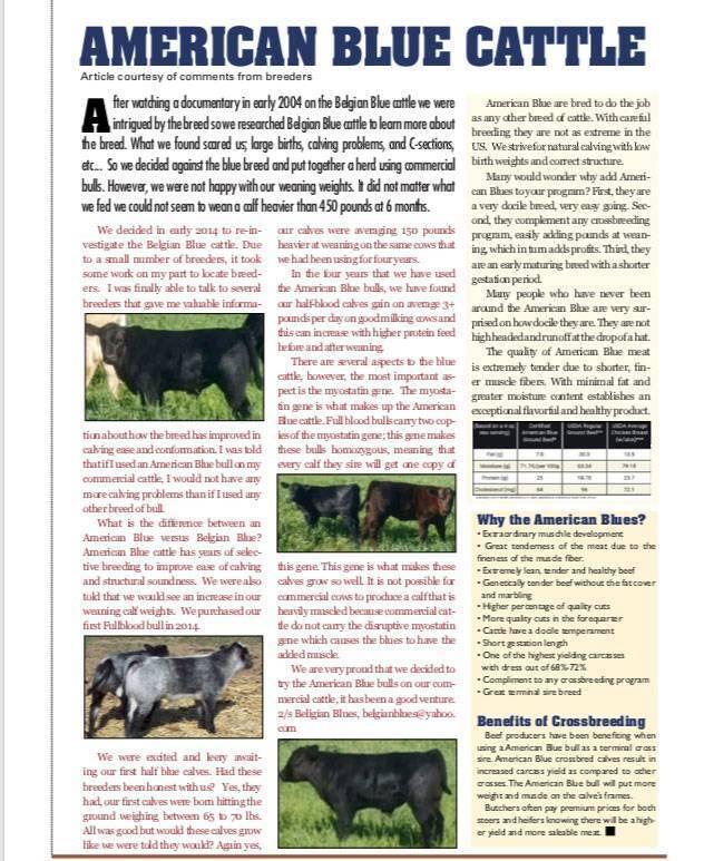 American Blue Cattle Association Inc National American